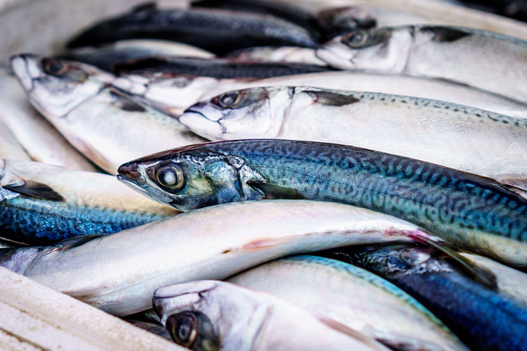 Рибата в Европа свършва