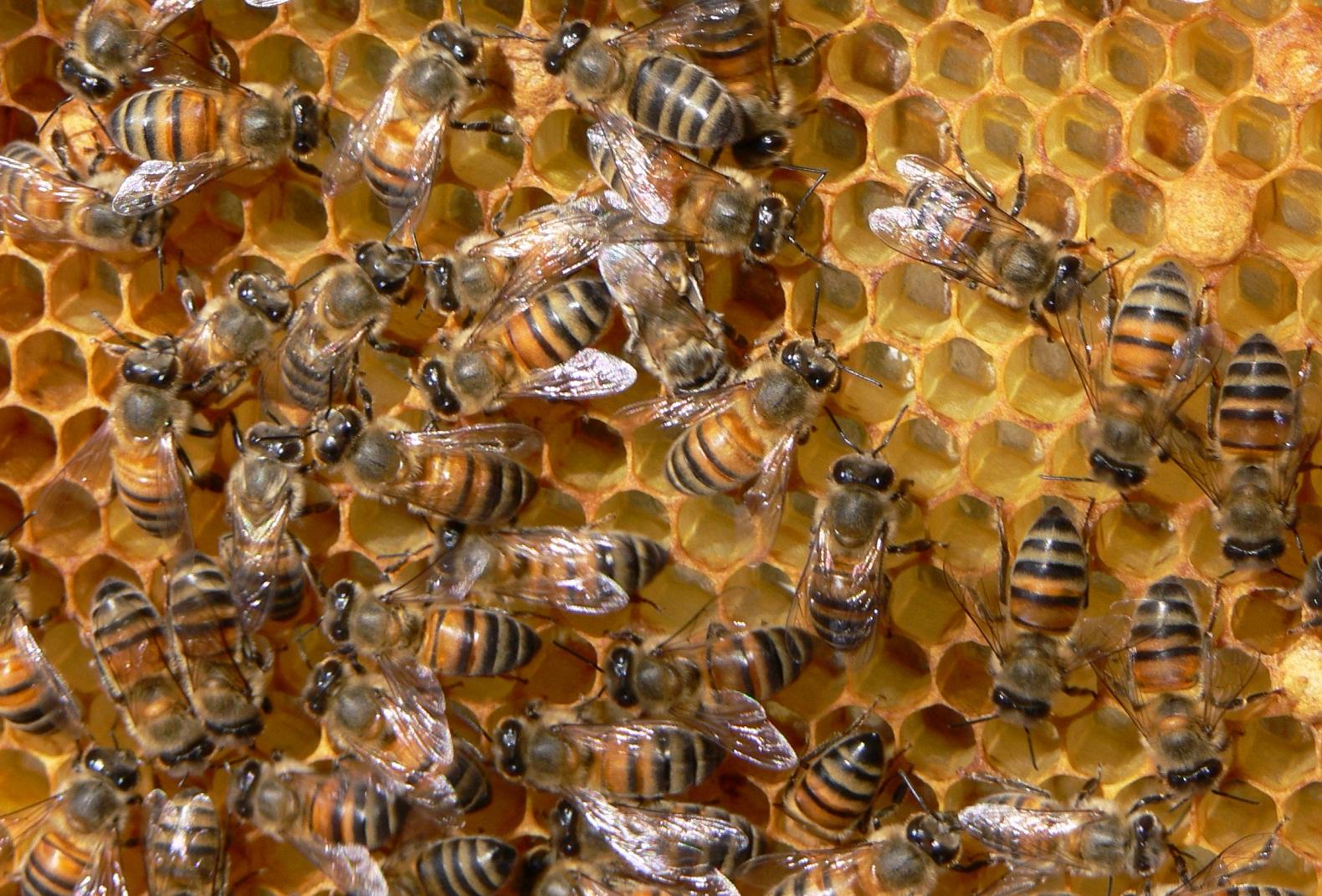 """Семинар """"Пчеларството в наши дни – решения и предизвикателства"""""""